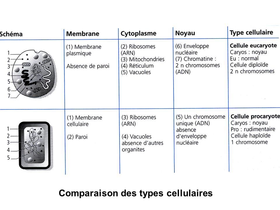 Comparaison des types cellulaires