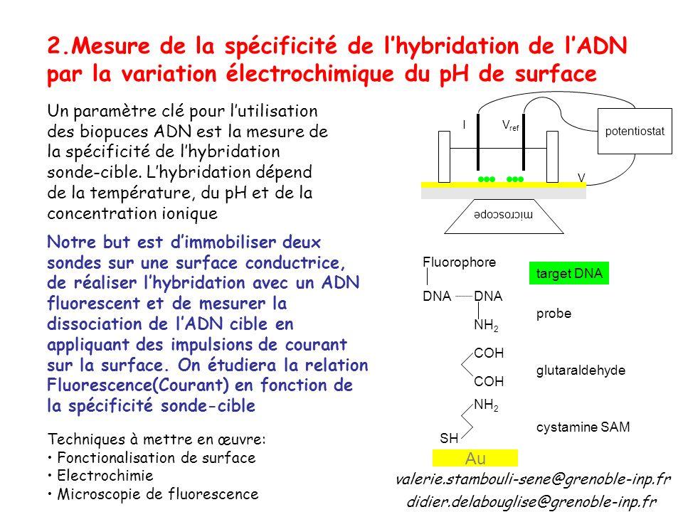 2.Mesure de la spécificité de l'hybridation de l'ADN par la variation électrochimique du pH de surface