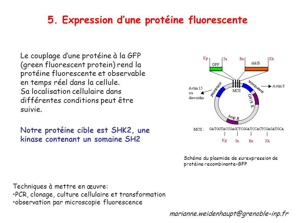 5. Expression d'une protéine fluorescente