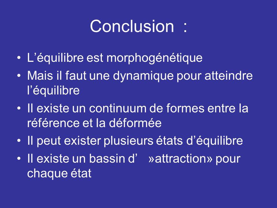Conclusion : L'équilibre est morphogénétique