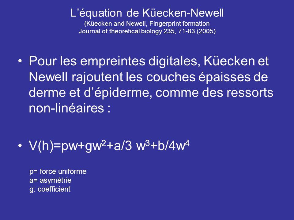 L'équation de Küecken-Newell (Küecken and Newell, Fingerprint formation Journal of theoretical biology 235, 71-83 (2005)