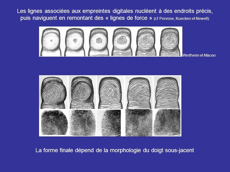 La forme finale dépend de la morphologie du doigt sous-jacent
