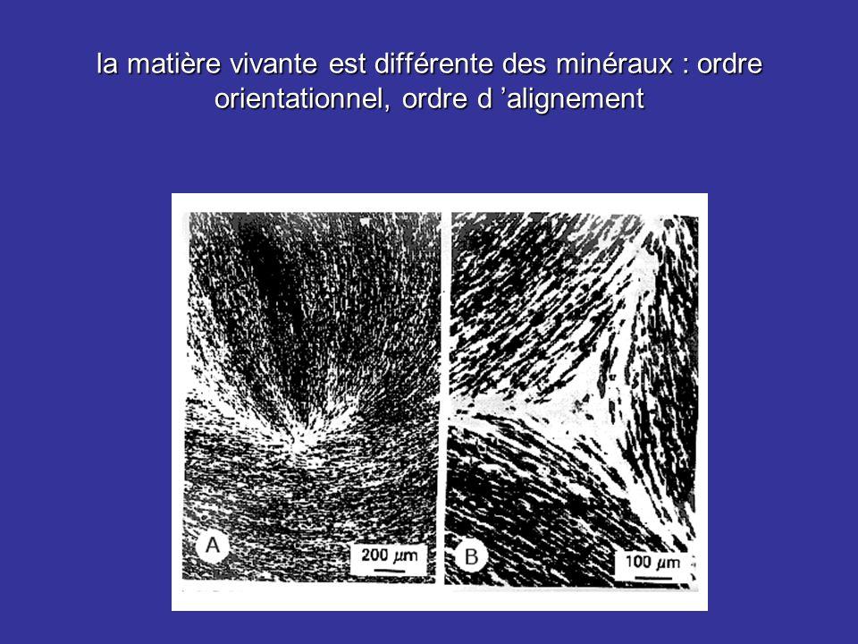 la matière vivante est différente des minéraux : ordre orientationnel, ordre d 'alignement