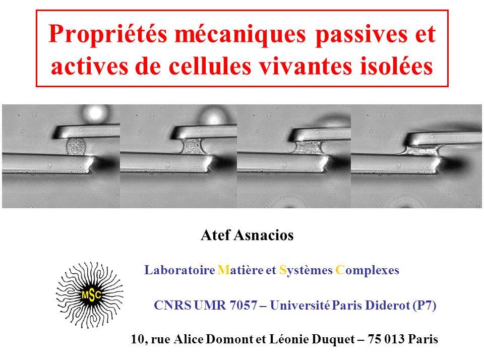 Propriétés mécaniques passives et actives de cellules vivantes isolées