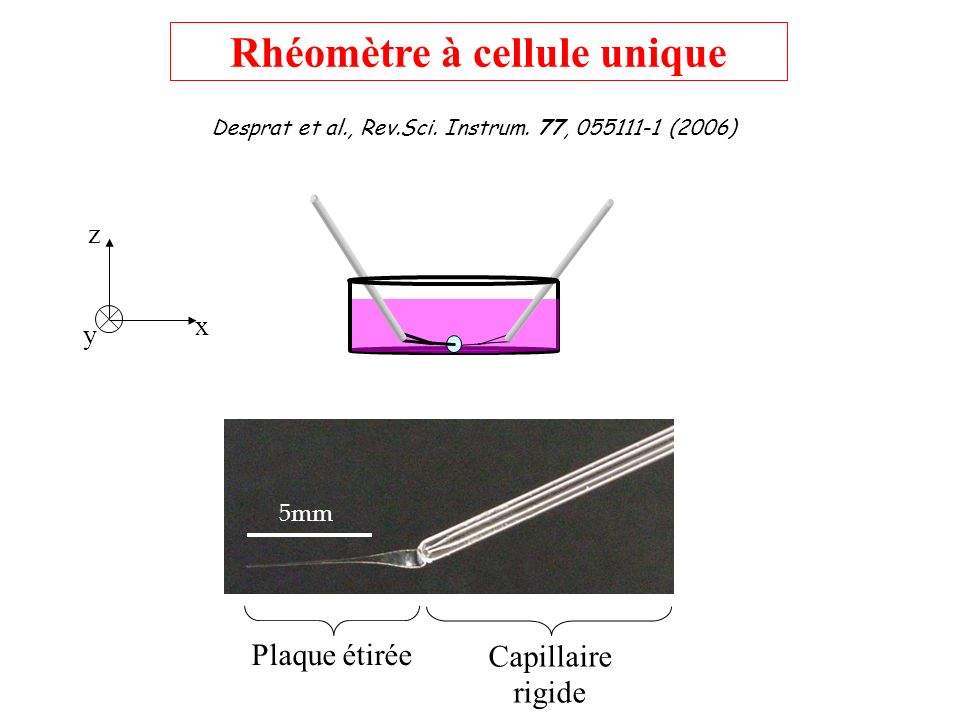 Rhéomètre à cellule unique