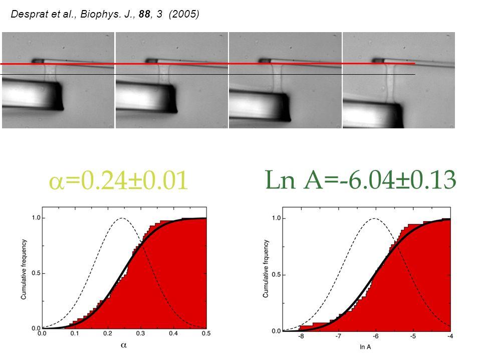 Desprat et al., Biophys. J., 88, 3 (2005)