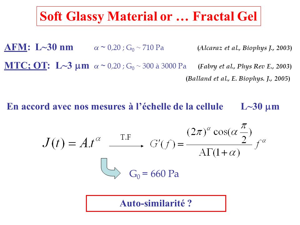 Soft Glassy Material or … Fractal Gel
