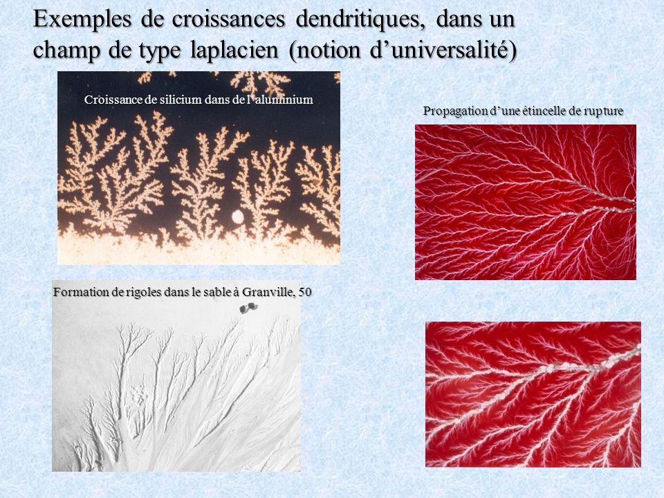 Exemples de croissances dendritiques, dans un champ de type laplacien (notion d'universalité)