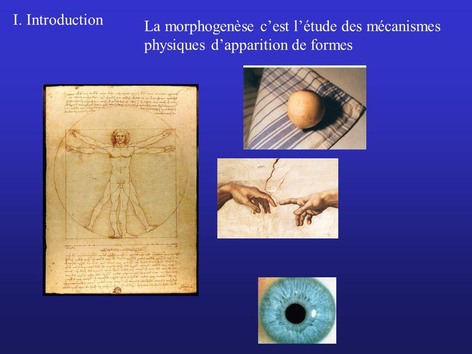 I. Introduction La morphogenèse c'est l'étude des mécanismes physiques d'apparition de formes