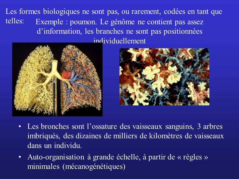 Les formes biologiques ne sont pas, ou rarement, codées en tant que telles: