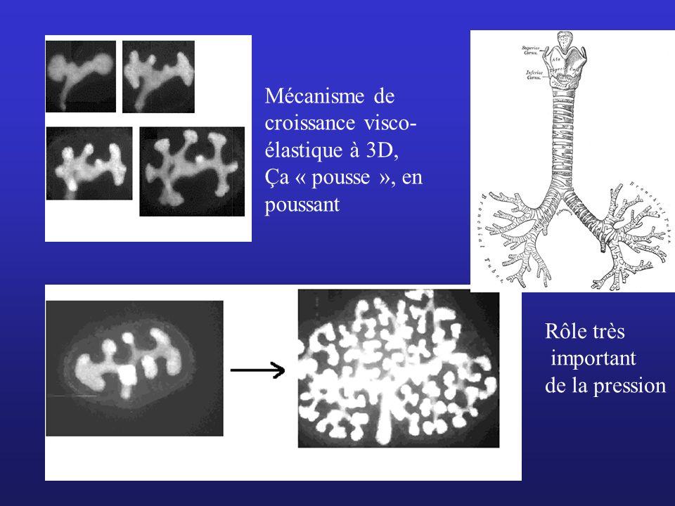 Mécanisme de croissance visco-élastique à 3D,