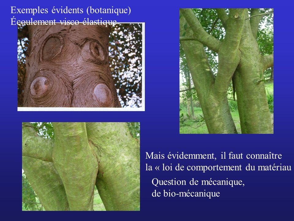 Exemples évidents (botanique)