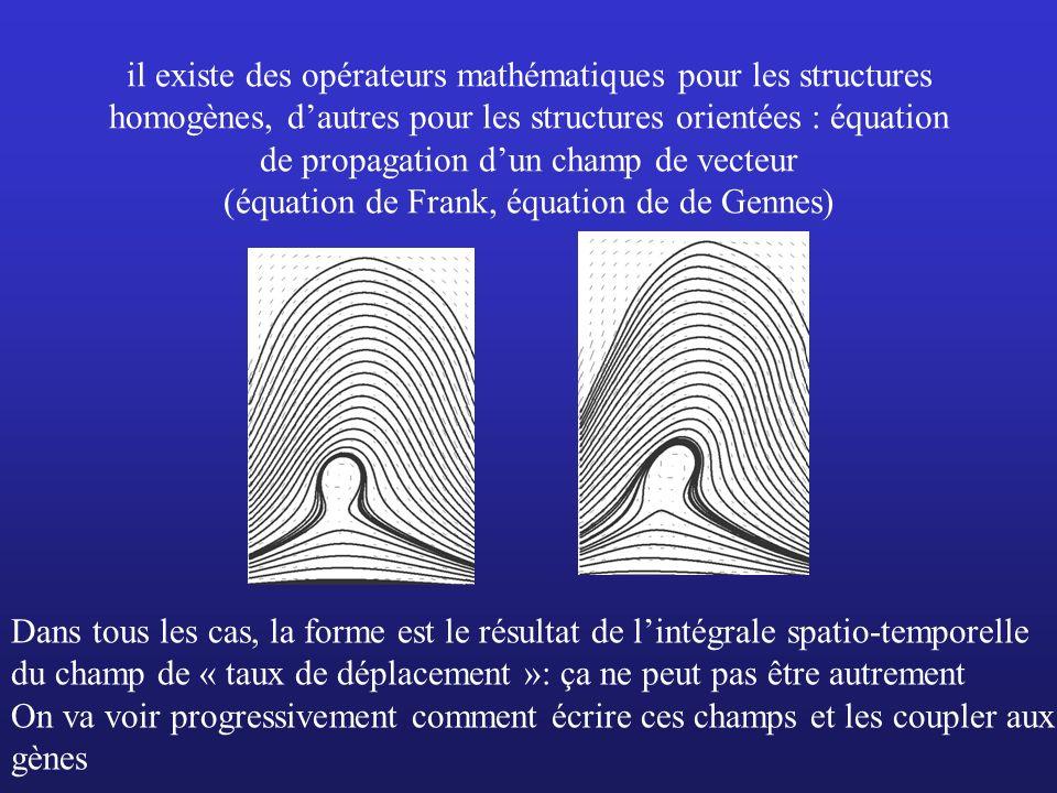 il existe des opérateurs mathématiques pour les structures homogènes, d'autres pour les structures orientées : équation de propagation d'un champ de vecteur (équation de Frank, équation de de Gennes)