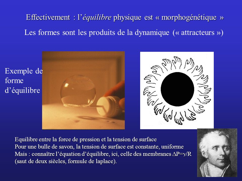 Effectivement : l'équilibre physique est « morphogénétique »