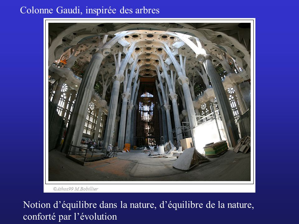 Colonne Gaudi, inspirée des arbres