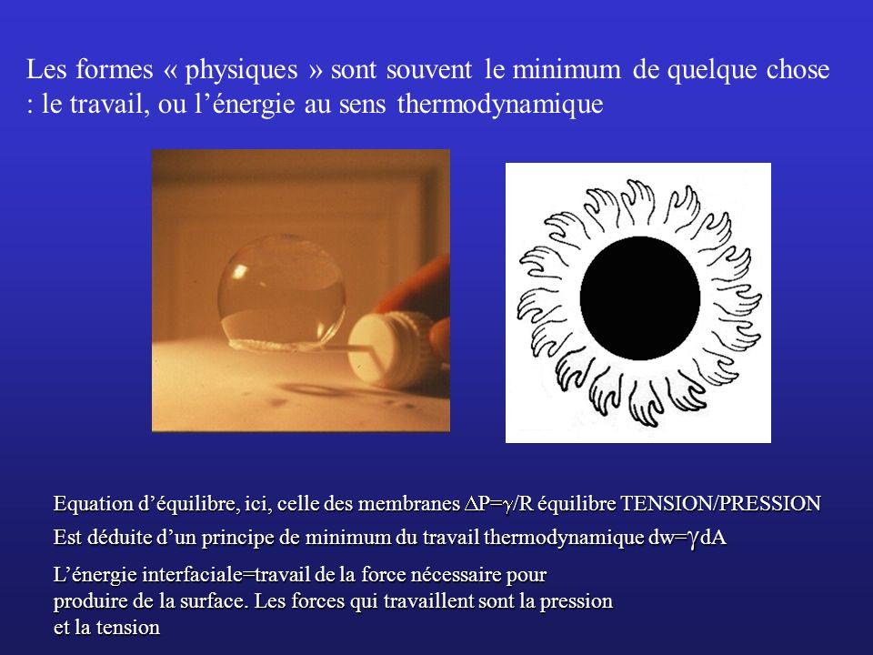 Les formes « physiques » sont souvent le minimum de quelque chose : le travail, ou l'énergie au sens thermodynamique