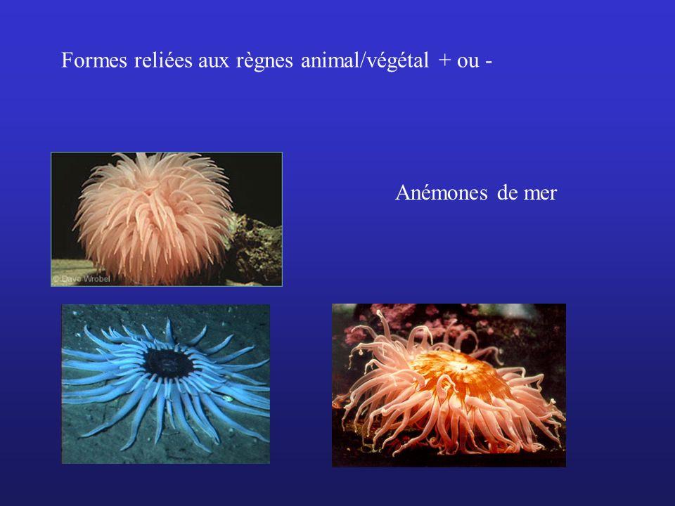 Formes reliées aux règnes animal/végétal + ou -