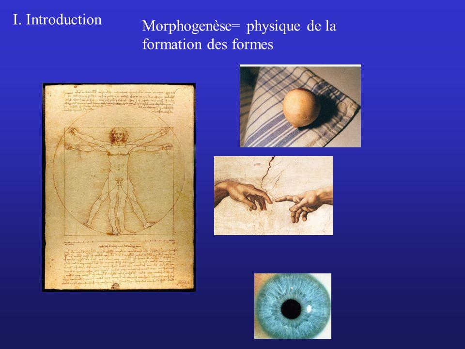 I. Introduction Morphogenèse= physique de la formation des formes