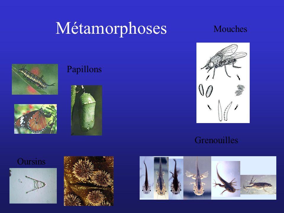 Métamorphoses Mouches Papillons Grenouilles Oursins