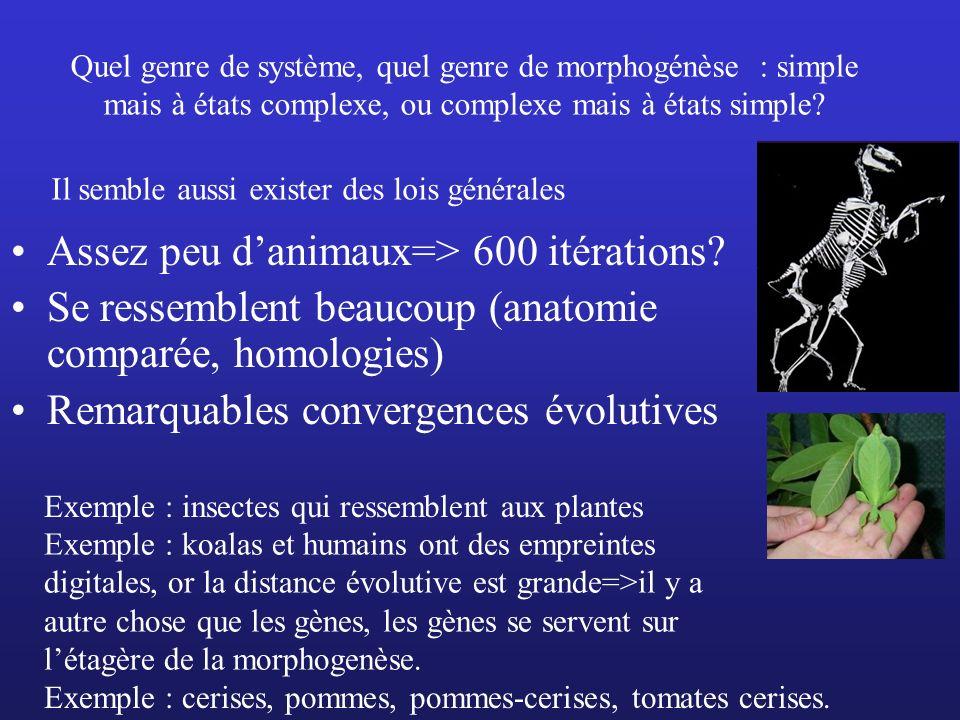 Assez peu d'animaux=> 600 itérations