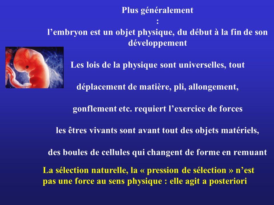 Plus généralement : l'embryon est un objet physique, du début à la fin de son développement Les lois de la physique sont universelles, tout déplacement de matière, pli, allongement, gonflement etc. requiert l'exercice de forces les êtres vivants sont avant tout des objets matériels, des boules de cellules qui changent de forme en remuant