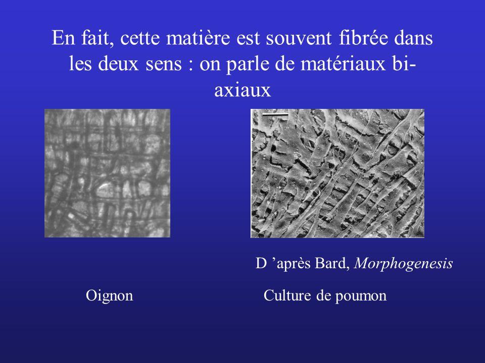 En fait, cette matière est souvent fibrée dans les deux sens : on parle de matériaux bi-axiaux