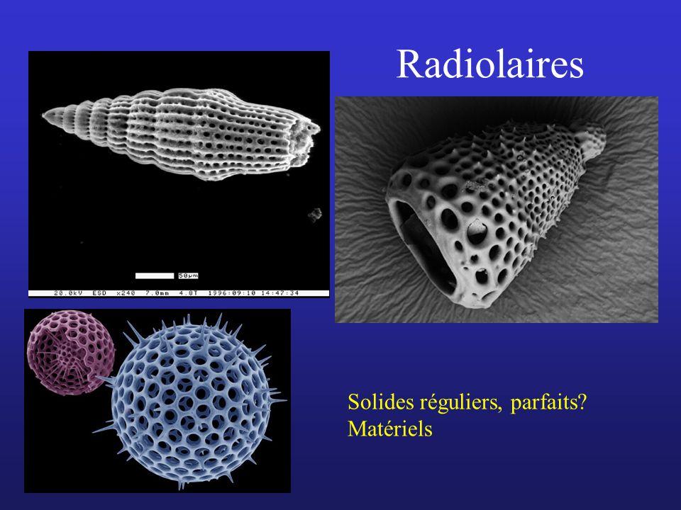 Radiolaires Solides réguliers, parfaits Matériels