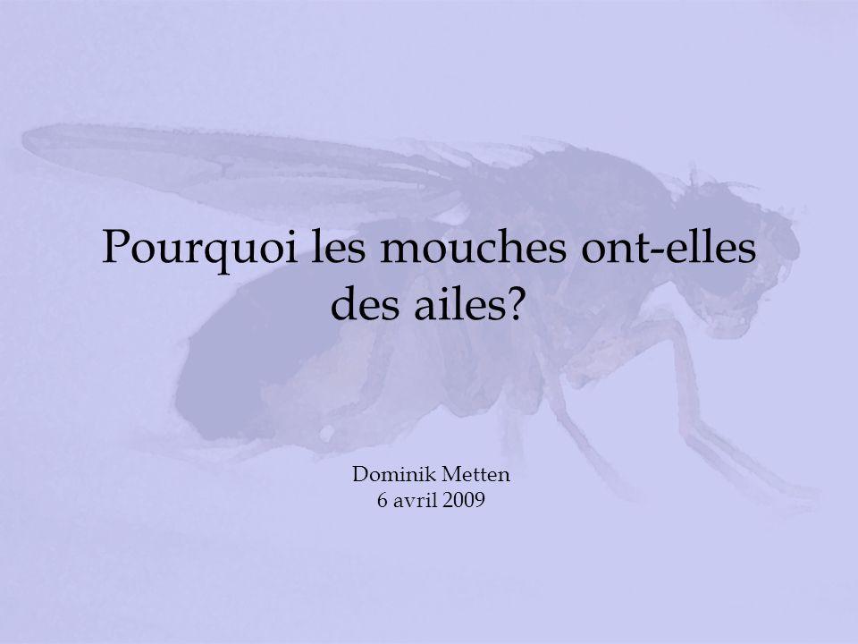 Pourquoi les mouches ont-elles des ailes