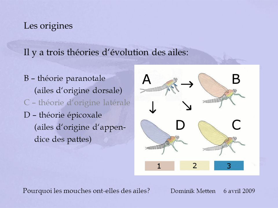 Pourquoi les mouches ont-elles des ailes Dominik Metten 6 avril 2009