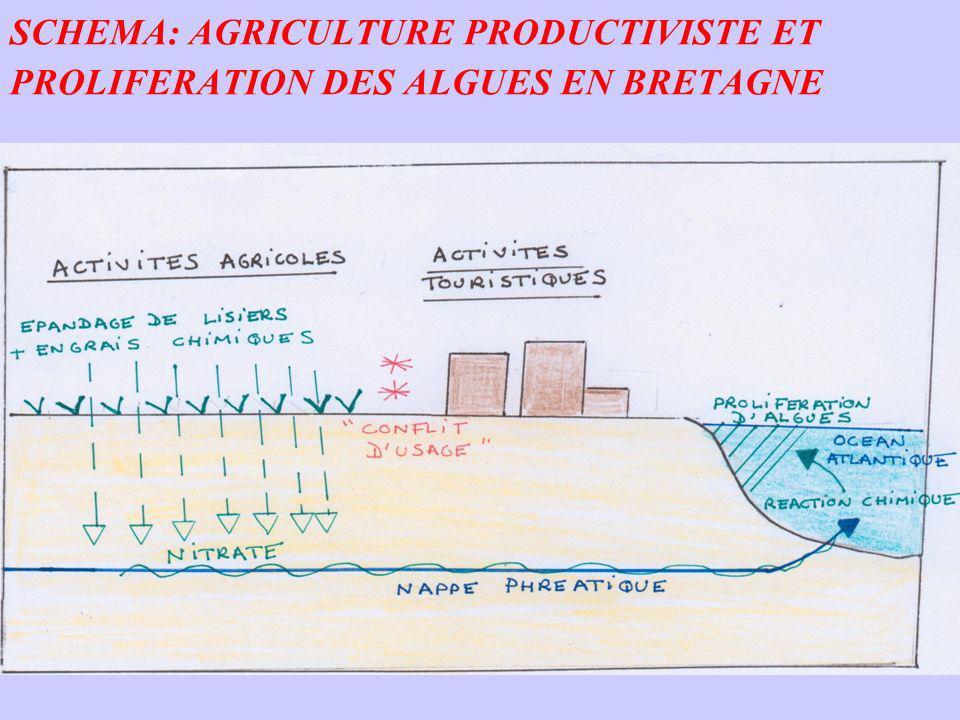 SCHEMA: AGRICULTURE PRODUCTIVISTE ET PROLIFERATION DES ALGUES EN BRETAGNE