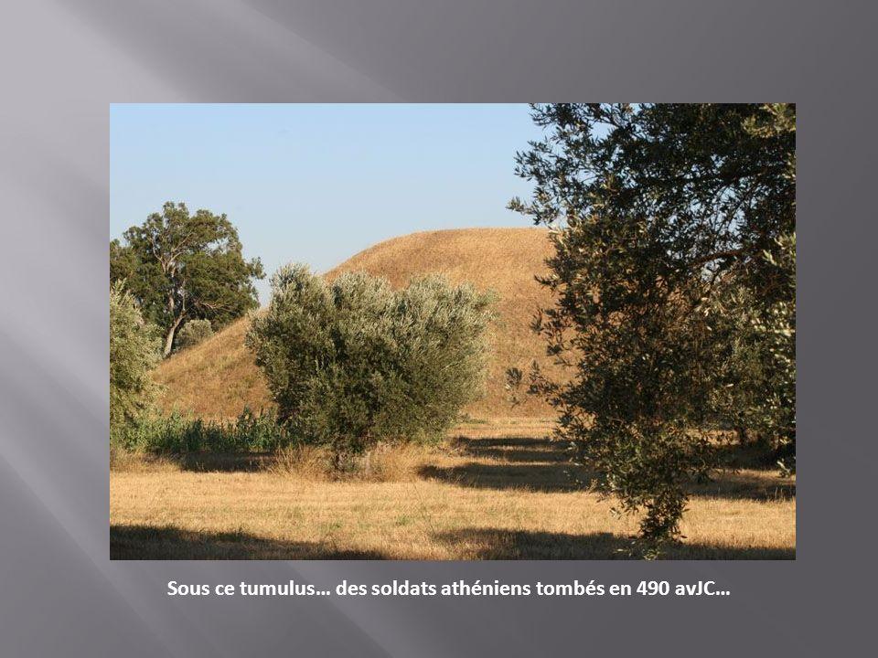 Sous ce tumulus… des soldats athéniens tombés en 490 avJC…