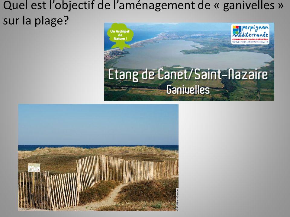 Quel est l'objectif de l'aménagement de « ganivelles » sur la plage