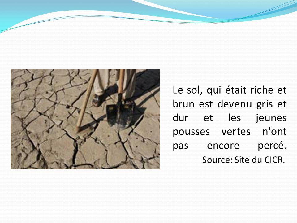 Le sol, qui était riche et brun est devenu gris et dur et les jeunes pousses vertes n ont pas encore percé. Source: Site du CICR.