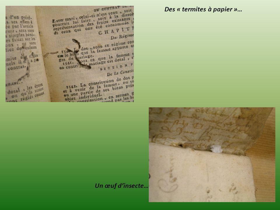 Des « termites à papier »…