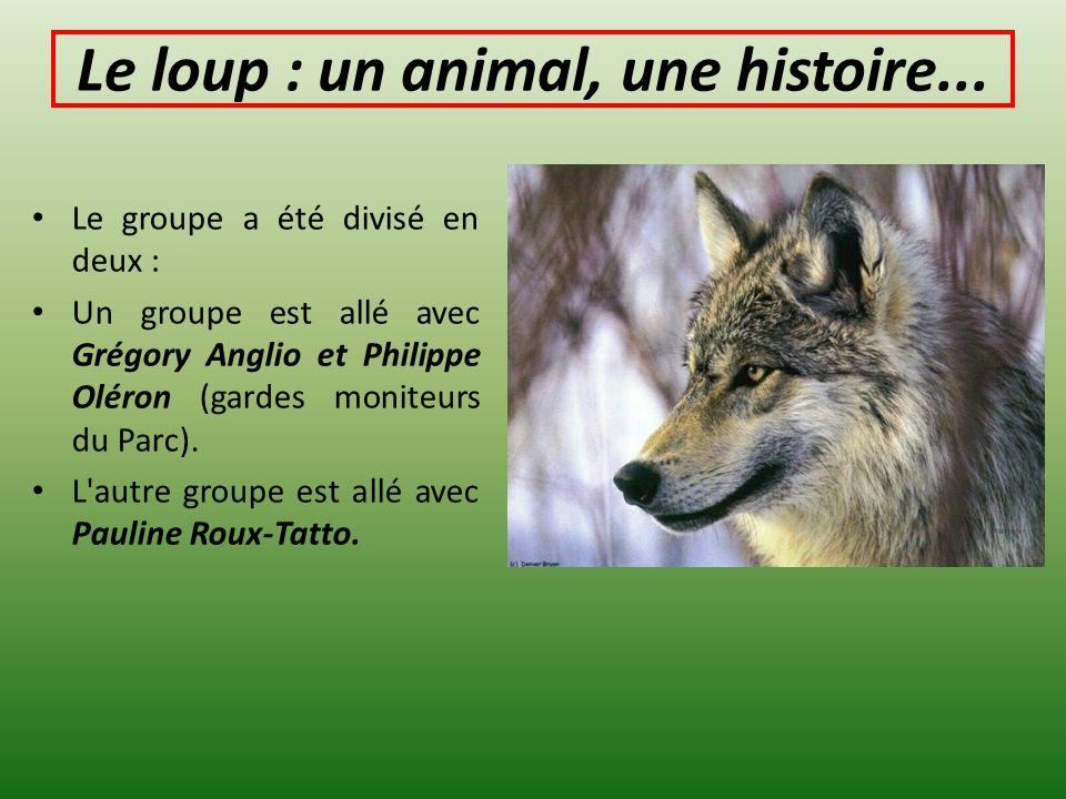 Le loup : un animal, une histoire...