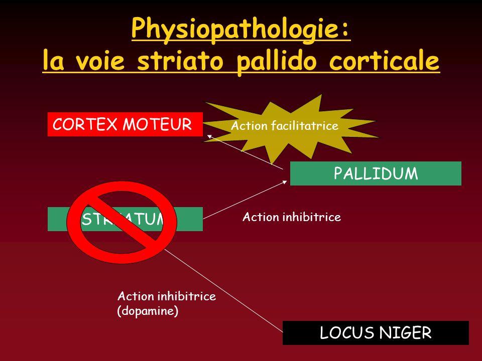 Physiopathologie: la voie striato pallido corticale