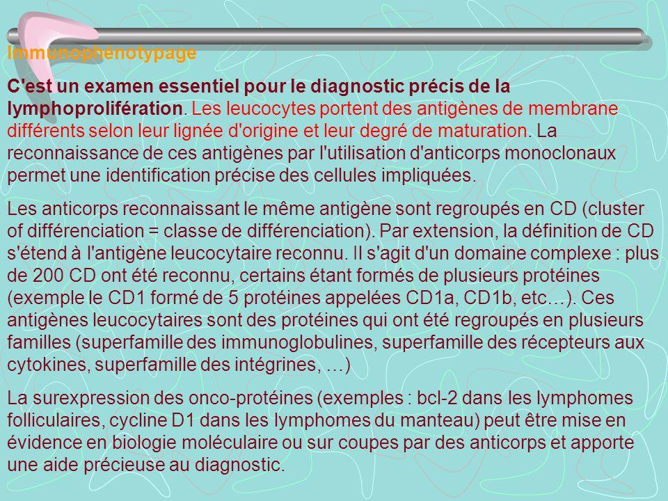 Immunophénotypage
