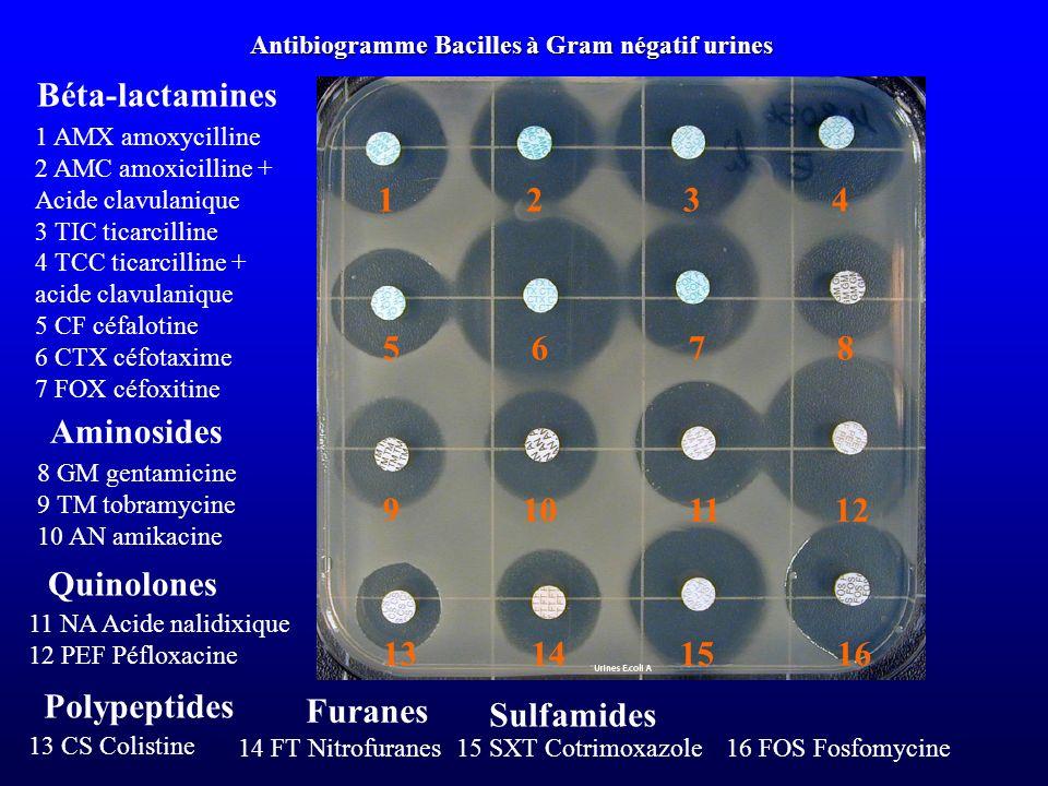 Antibiogramme Bacilles à Gram négatif urines