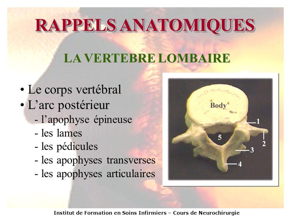 RAPPELS ANATOMIQUES LA VERTEBRE LOMBAIRE Le corps vertébral