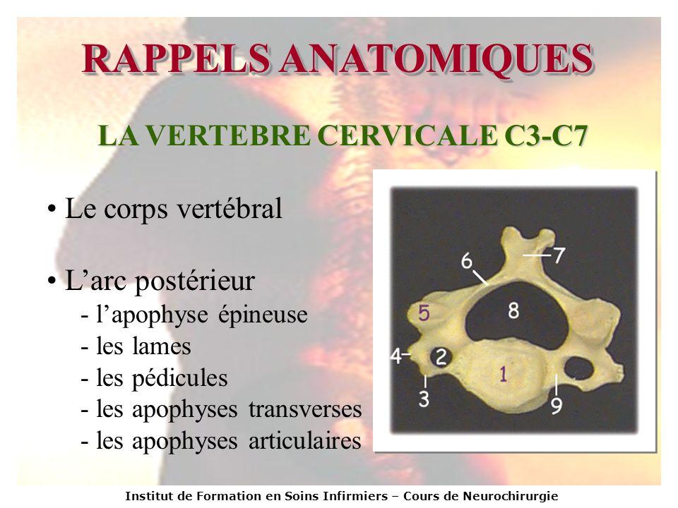 LA VERTEBRE CERVICALE C3-C7
