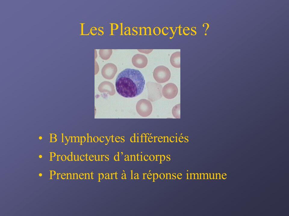 Les Plasmocytes B lymphocytes différenciés Producteurs d'anticorps