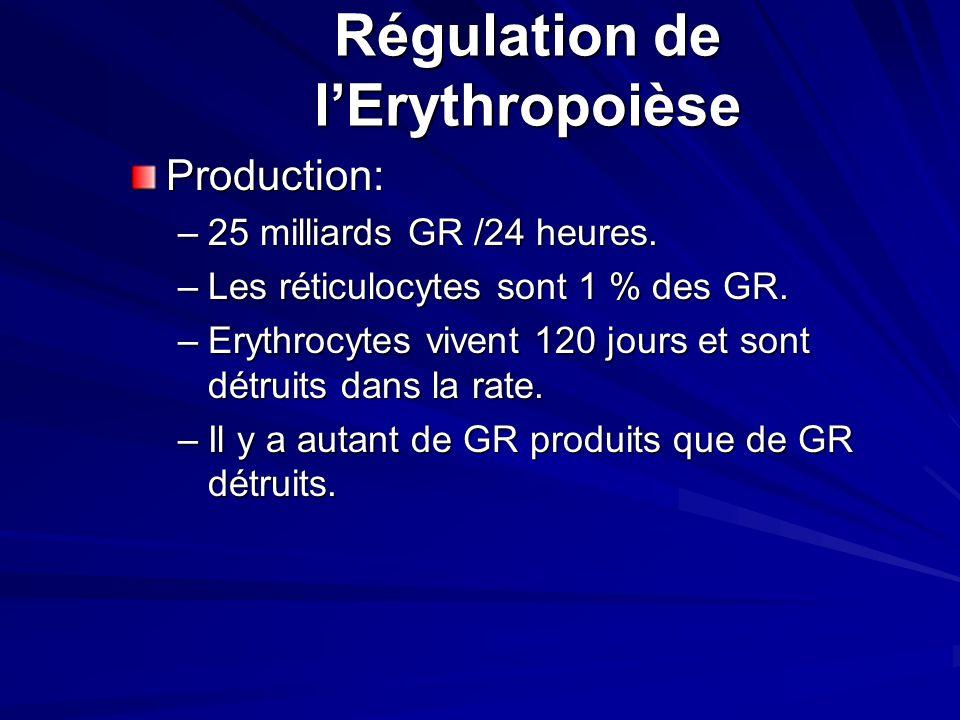 Régulation de l'Erythropoièse