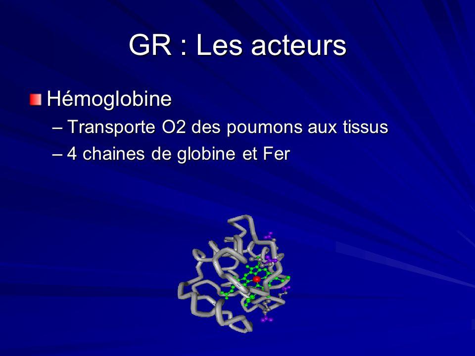 GR : Les acteurs Hémoglobine Transporte O2 des poumons aux tissus