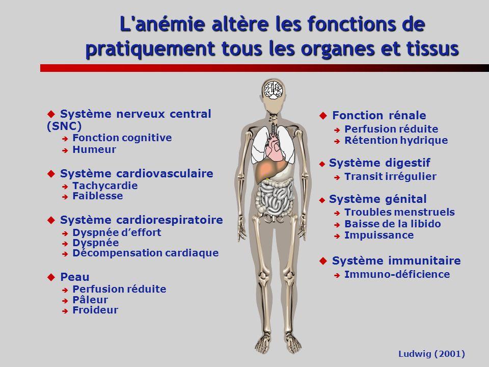L anémie altère les fonctions de pratiquement tous les organes et tissus