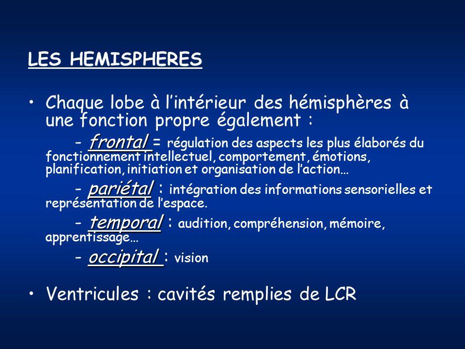 LES HEMISPHERES Chaque lobe à l'intérieur des hémisphères à une fonction propre également :