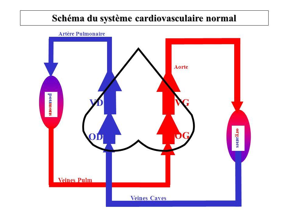 Schéma du système cardiovasculaire normal