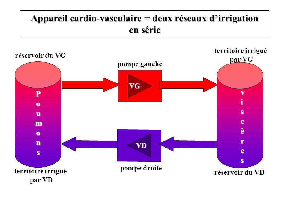 Appareil cardio-vasculaire = deux réseaux d'irrigation en série