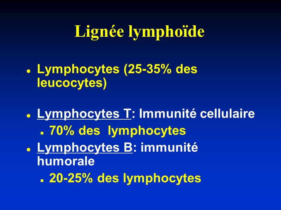 Lignée lymphoïde Lymphocytes (25-35% des leucocytes)