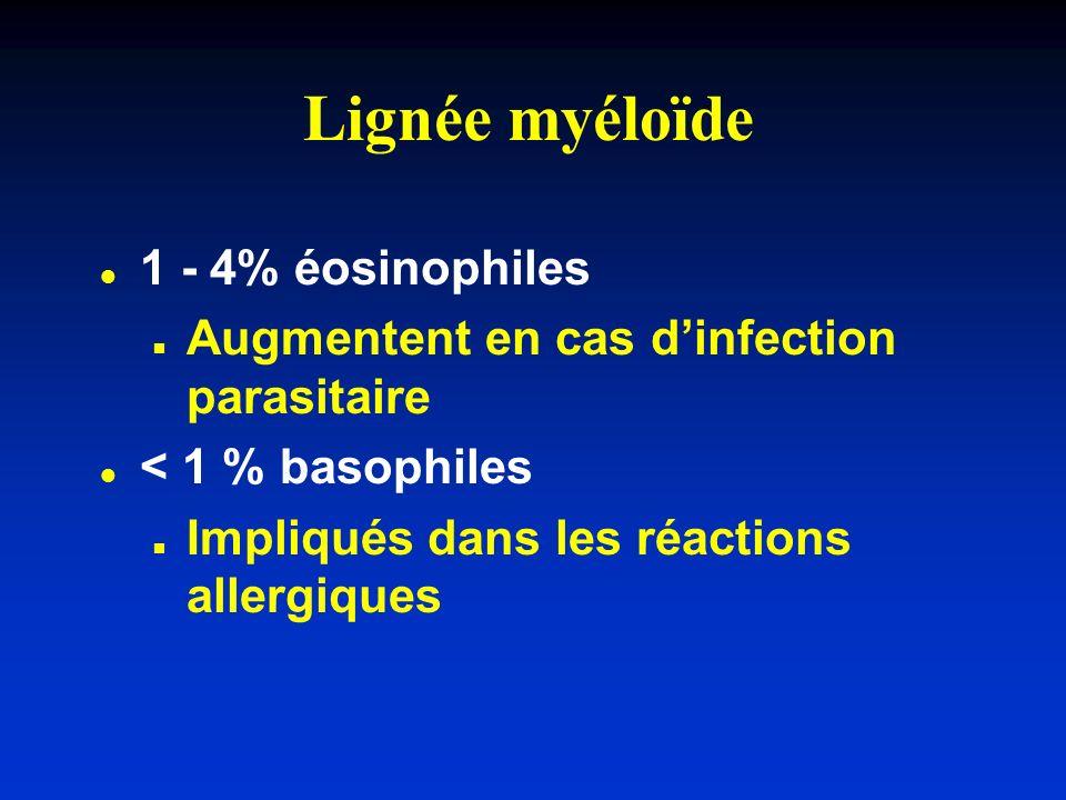 Lignée myéloïde 1 - 4% éosinophiles