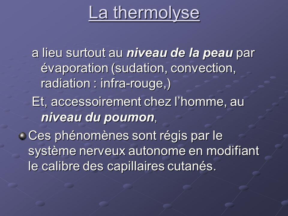 La thermolyse a lieu surtout au niveau de la peau par évaporation (sudation, convection, radiation : infra-rouge,)